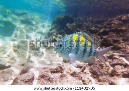 Fish in Caribbean Sea of Mexico