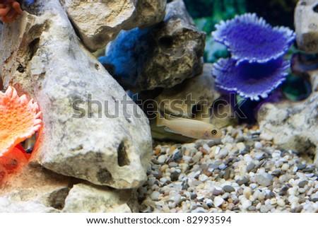 Fish in fishtank - stock photo