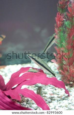 Fish in fishtank. Underwater - stock photo