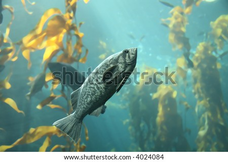 fish in kelp forest - stock photo