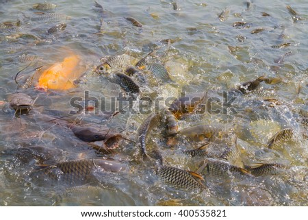 fish in river / feeding
