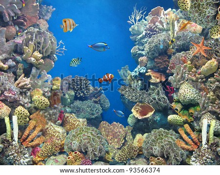 fish in the aquarium - stock photo