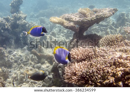 Fish in the Indian Ocean - stock photo