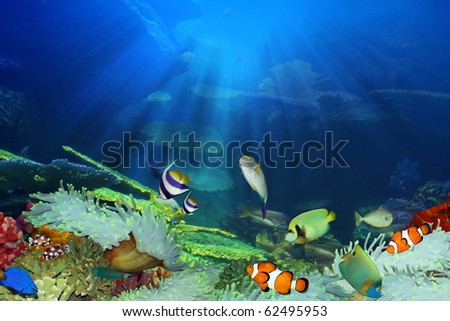Fish in the sea - stock photo