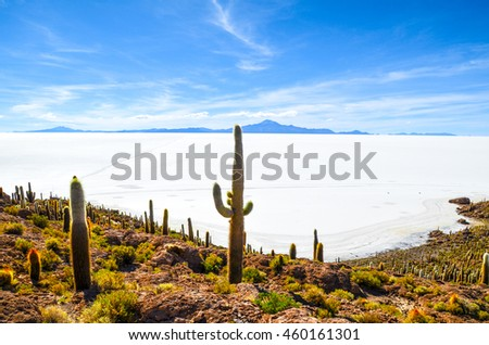 Fish Island covered by cactus plants in the middle of Salt Desert, Bolivia