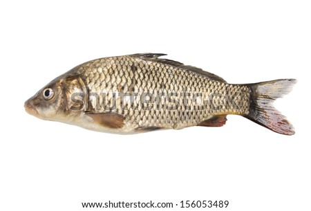 fish isolated on a white background - stock photo