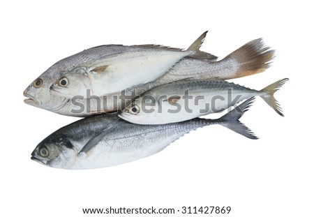 Fish isolated on the white background, seafood concept