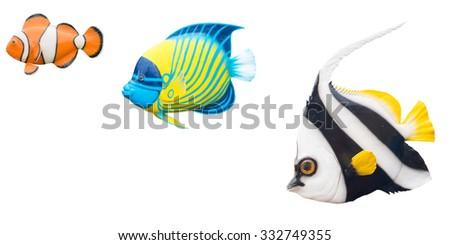 fish isolated on white background - stock photo