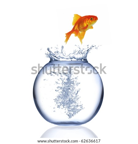 Fish jumping out of aquarium isolated on a white background - stock photo