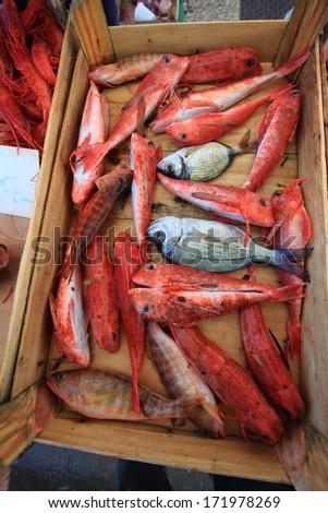 fish market harbor of Trapani - stock photo