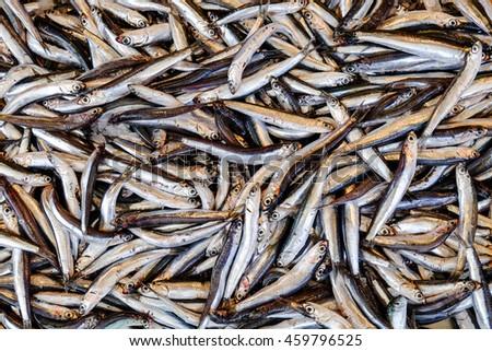 Fish market in Corfu Town - stock photo