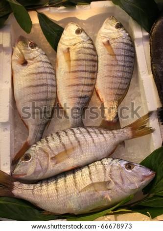Fish Markets - Fresh sand steenbras (Lythognathus mormyrus). - stock photo