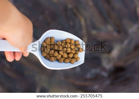 Fish meal in Big spoon, focus on food. - stock photo