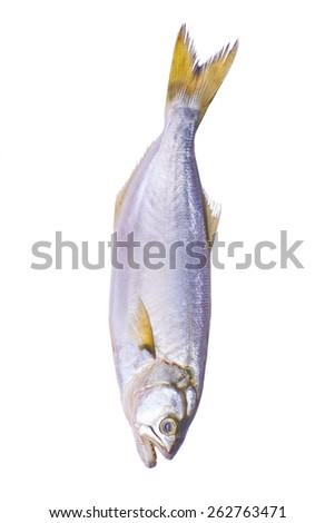 Fish on a white background isolated - stock photo
