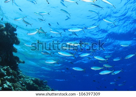 Fish on blue water background - stock photo