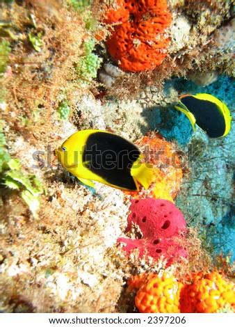 Fish on brilliant colored coral reef - stock photo
