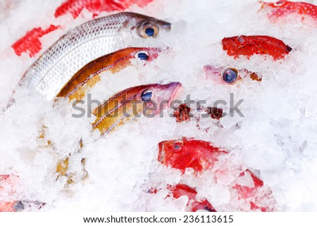 fish on ice - stock photo