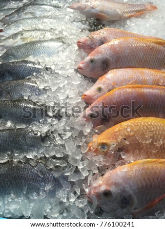 Fish on Ice in Supermarket