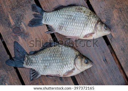 fish on the boards - stock photo