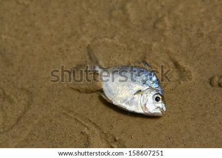 fish on the sand