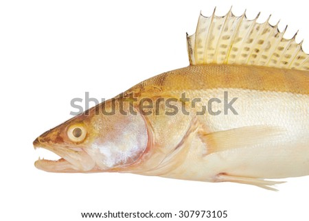 Fish perch isolated on a white background - stock photo