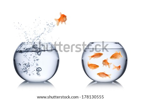 fish return concept - stock photo