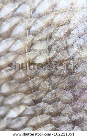 Fish scale texture - stock photo