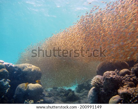 Fish school over coral reef - stock photo