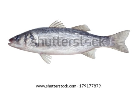 fish seabass Isolated on the white background - stock photo
