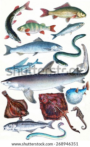 Fish, sharks and ray collection, vintage engraved illustration. La Vie dans la nature, 1890.  - stock photo