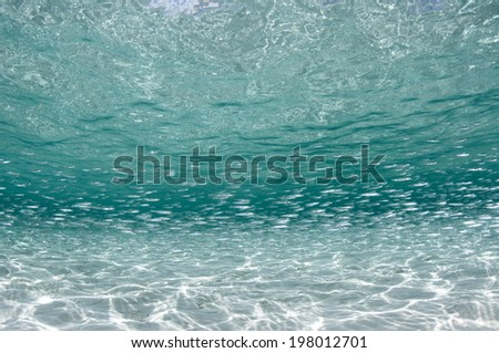 Fish Shoal in the Shallows - stock photo