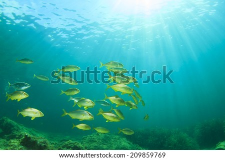 Fish shoal Mediterranean Sea - stock photo