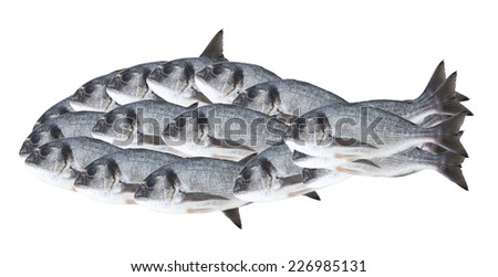 Fish silhouette isolated on white