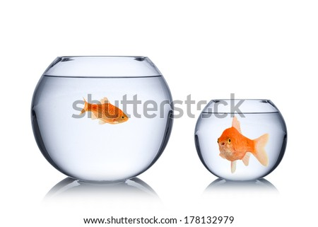 fish social envy concept - stock photo