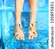 Fish Spa pedicure - Rufa Garra pedicure treatment. Closeup of woman enjoying skin care fish spa beauty treatment. - stock photo