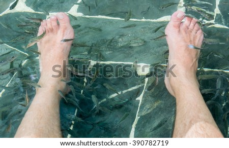 Fish spa pedicure wellness skin care treatment with the fish rufa garra, also called doctor fish, nibble fish and kangal fish, Thailand - stock photo