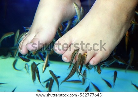 Doctor fish stock images royalty free images vectors for Doctor fish pedicure