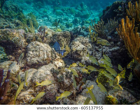 Stock images royalty free images vectors shutterstock for Caribbean reef fish