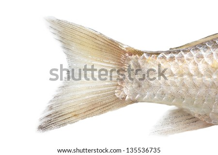 Tail fins stock images royalty free images vectors for Fish tail fin