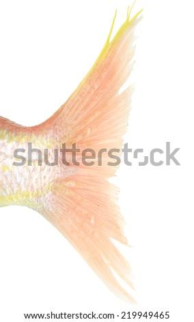 Fish tail studio isolated on white background - stock photo