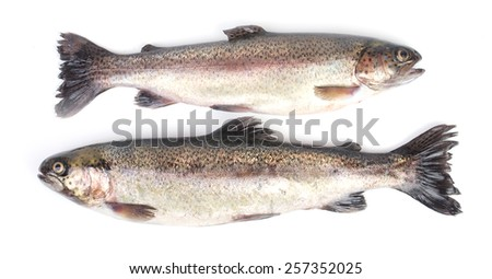 Fish trout - stock photo
