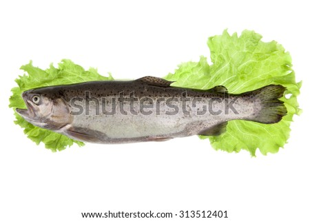fish trout with lettuce leaves on a white background