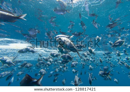 Fish Underwater/ a school of small fish underwater