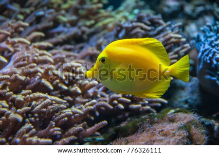 Fish underwater in oceanarium