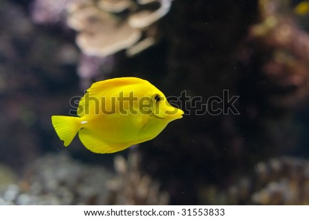 Fish X - stock photo