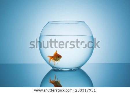 fishbowl with a goldfish in water on blue background - stock photo