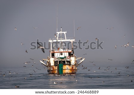 Fisher boat on a calm sea, surrounded by many seagulls  - stock photo