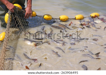 Fisherman catches a freshwater fish - stock photo