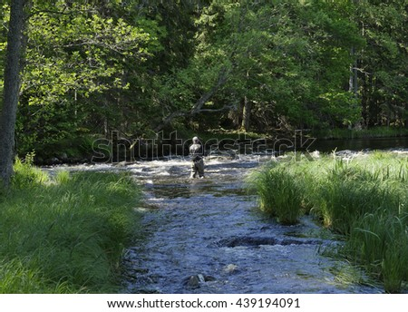 Fisherman catches of salmon fly fishing in the river  - stock photo