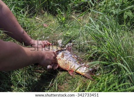 Fisherman cleaning fish from scales on the grass with knife - stock photo